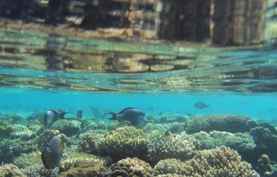 Odsprzedam wakacje | Egipt | 22-29 październik