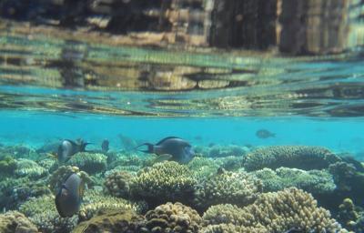 Odsprzedam wakacje | Egipt | 31.07 - 07.08 | 2 osoby