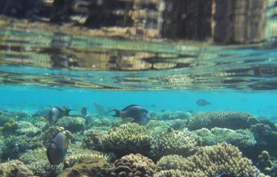 Odsprzedam wakacje | Egipt | 2 osoby | 30.09 - 10.10