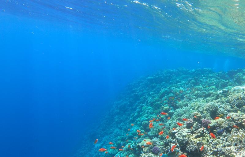 Odsprzedam wakacje | Hurghada 2-9 maja | 3 os. dorosłe
